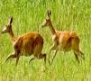 Shuklaphanta Wild Life  Reserve